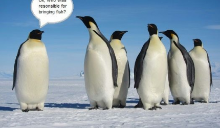 Pinguin Responsible